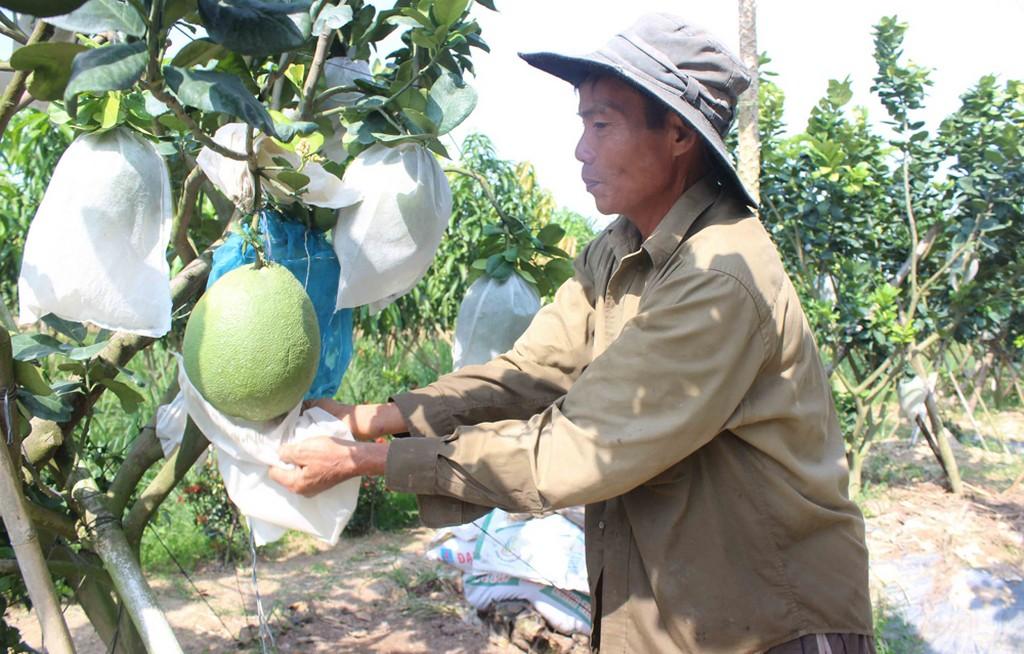 Chuyên sử dụng túi vải bảo vệ môi trường