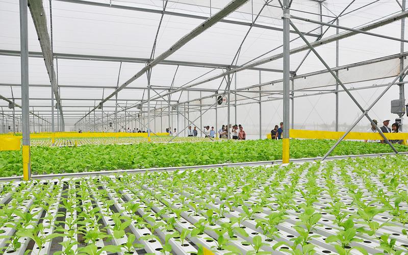 Ứng dụng màng PE trong trồng trọt